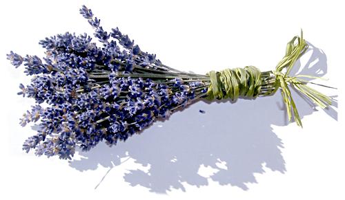 echter lavendel lavandula angustifolia hexenladen. Black Bedroom Furniture Sets. Home Design Ideas