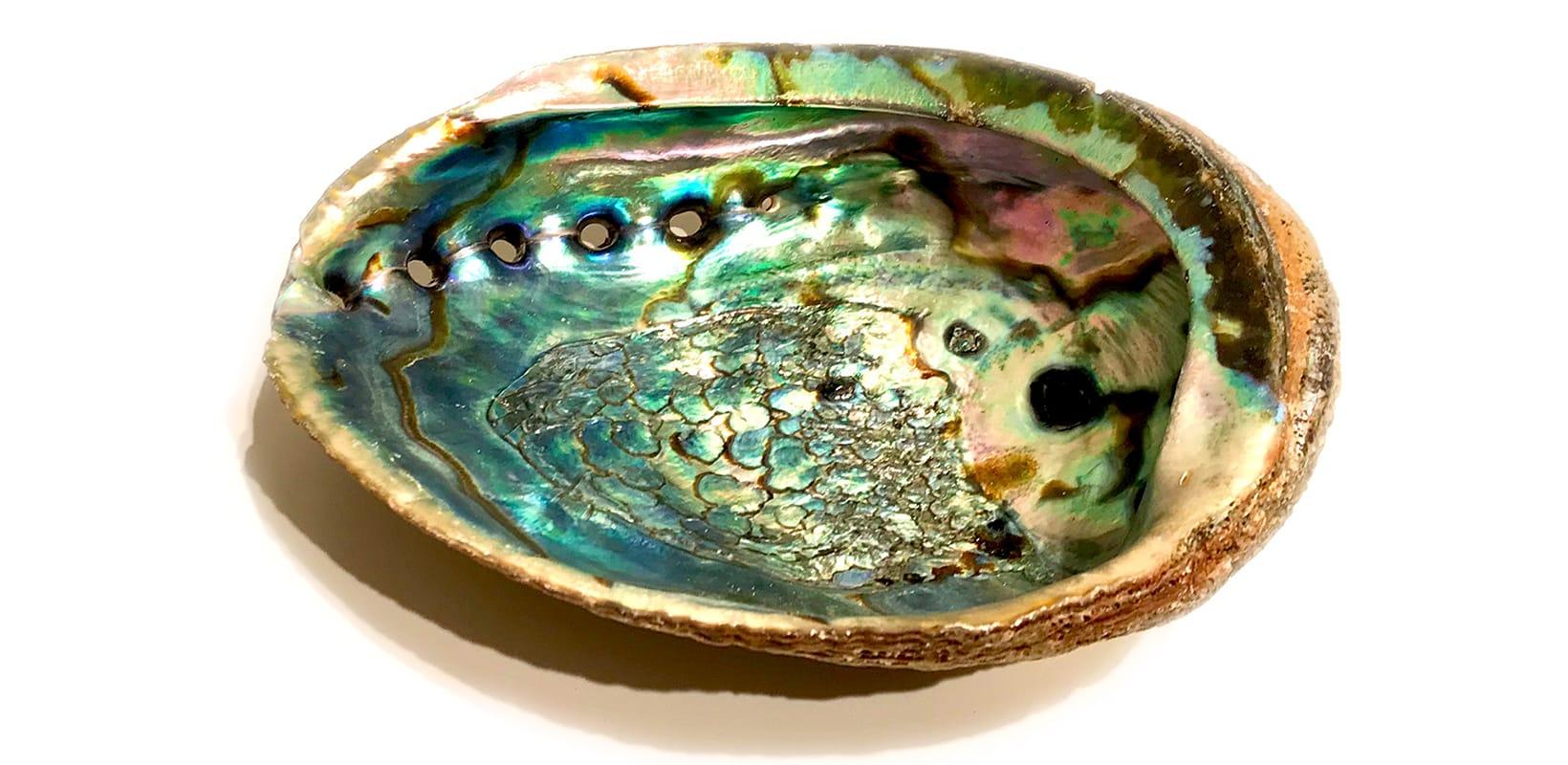 Abalone - blau