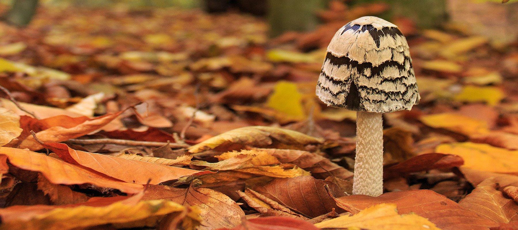 Magie auf dem Herbstspaziergang
