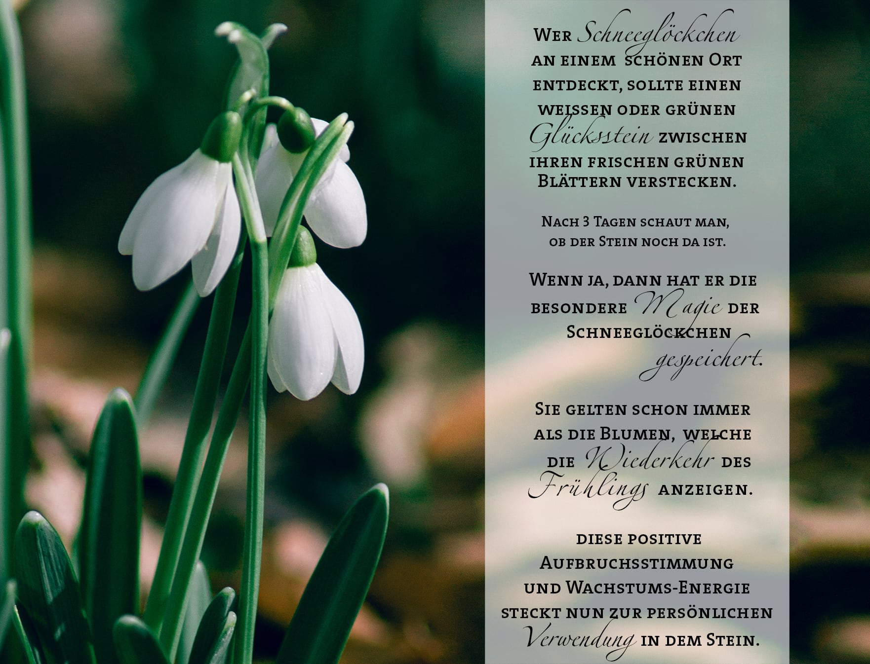 Großzügig Blumen Mit Lebensmittelfarbe Bilder - Druckbare ...