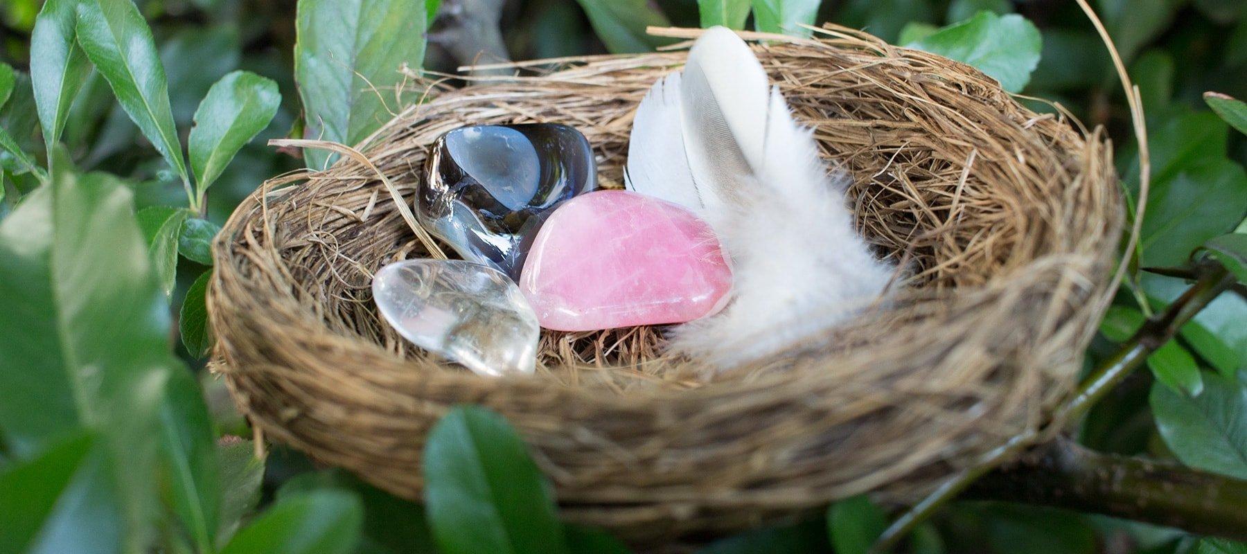 Vogelnest für die Fruchtbarkeit
