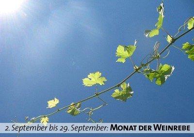 Keltischer Baumkalender - Monat der Weinrebe