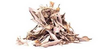 Shamanic White Sage (30 Gramm, lose), Salbei, Indianersalbei, weißer Salbei